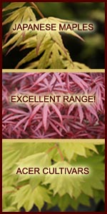 japanese maples collection.jpg